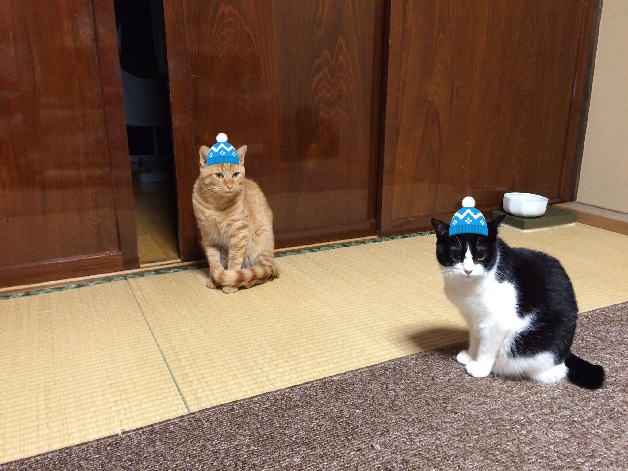 猫の動画ファンディングのお願い
