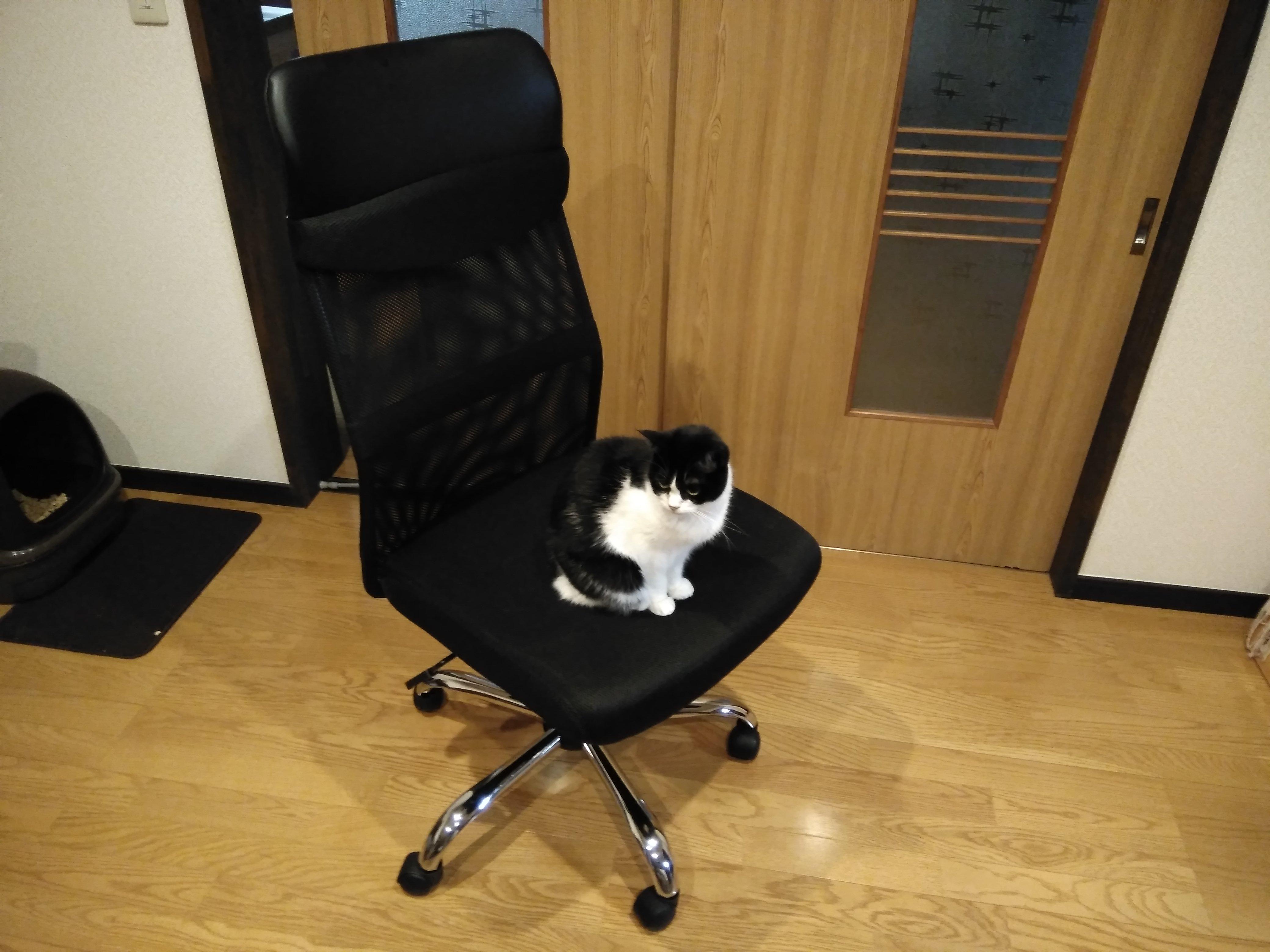 DTM用の椅子が5000円!?タンスのゲン G-AIRハイバックオフィスチェアがおすすめ&コスパ高すぎたレビュー