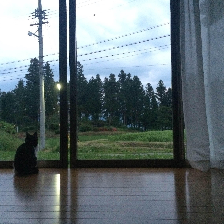 里山に住む者の宿命【雑草との戦い】
